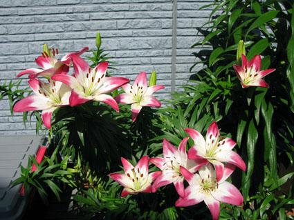 花の色は~!_f0129726_2304964.jpg