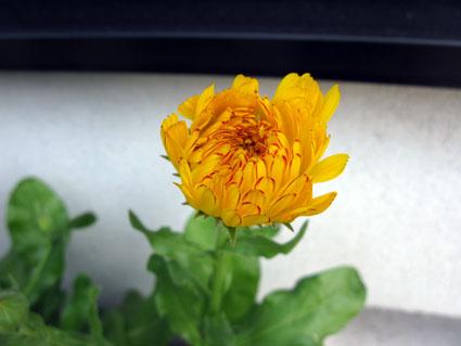 花の色は~!_f0129726_2323730.jpg