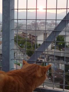 夕焼小焼猫 しぇる編。_a0143140_2112219.jpg