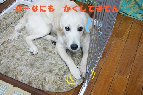 c0214455_18375362.jpg