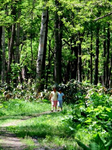 三度キビタキ。♀も初認。森の妖精との出会い。_b0165760_1674923.jpg