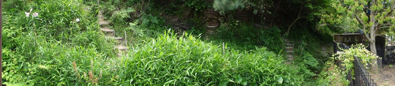 タマネギ435個収穫_c0108460_211798.jpg