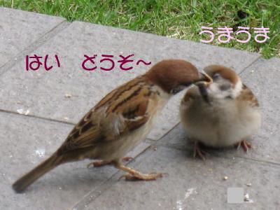 b0158061_17464952.jpg
