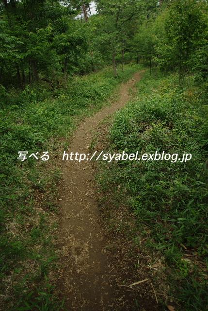 c0153764_20162127.jpg