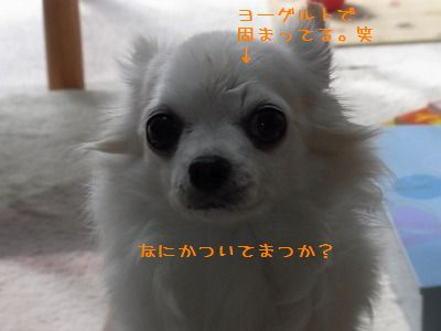 e0059267_042859.jpg