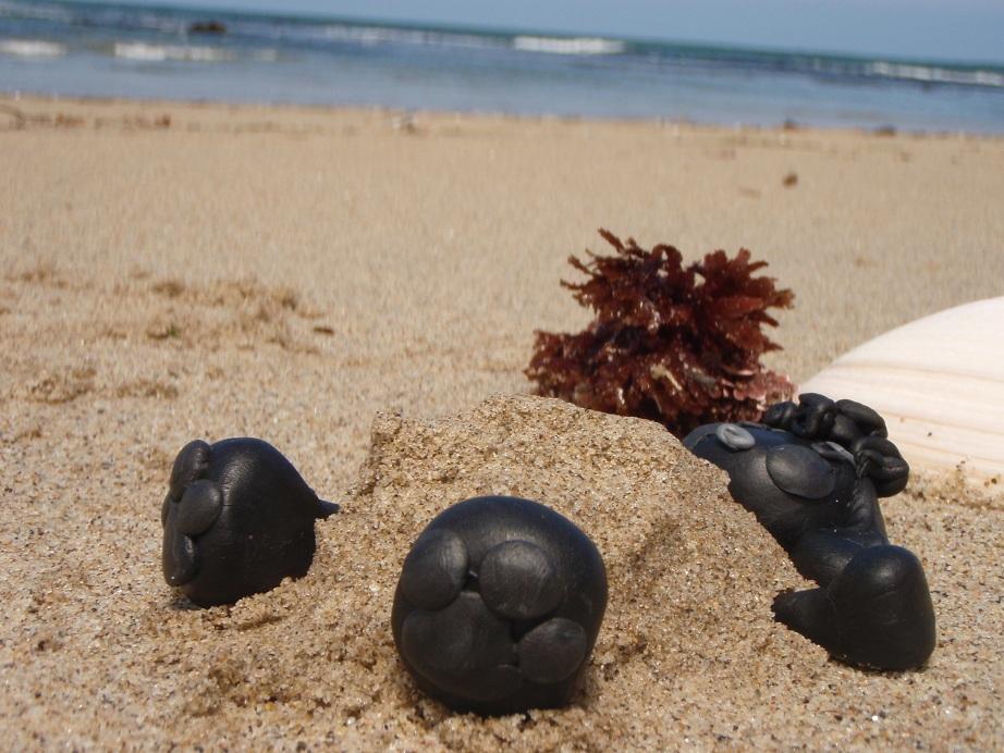 なつおさん、砂に抱かれて。。。♪ ~素敵な週末の過ごし方~_f0096569_2134263.jpg