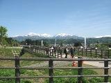 根小屋の芝桜_e0142373_1415770.jpg