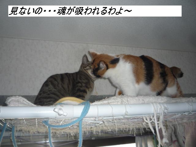 b0112380_20114675.jpg