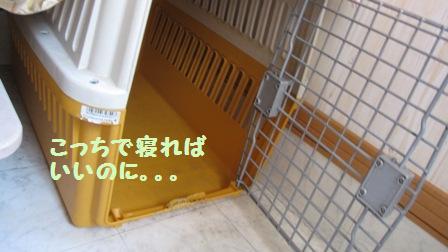 f0212597_16172061.jpg