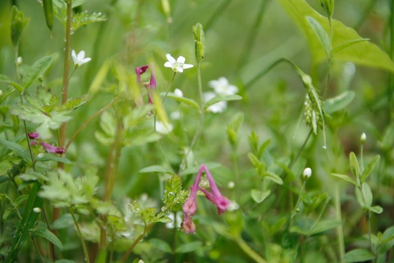 小さい花たち_f0091207_1505024.jpg
