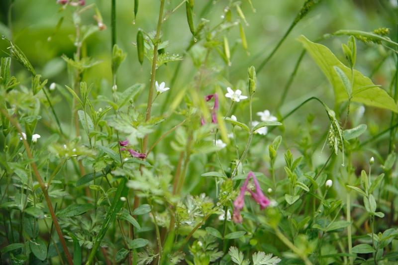 小さい花たち_f0091207_1563396.jpg