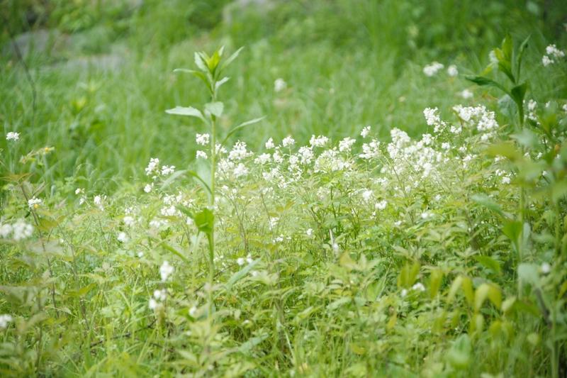 小さい花たち_f0091207_157476.jpg