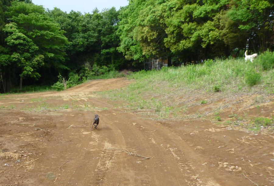 ドッグラン併設の遊歩道完成_d0151813_144698.jpg