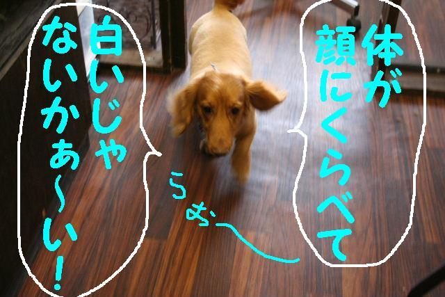 b0130018_13514095.jpg
