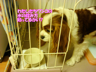b0185323_1295126.jpg