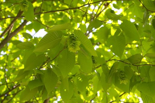 6/1 新緑の季節_b0174425_10392043.jpg
