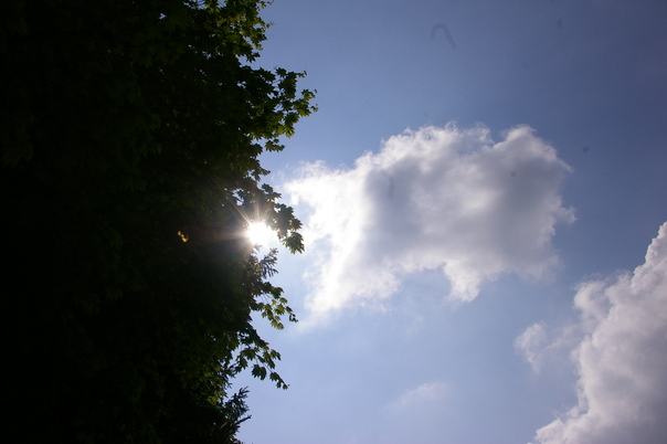 6/1 新緑の季節_b0174425_936548.jpg