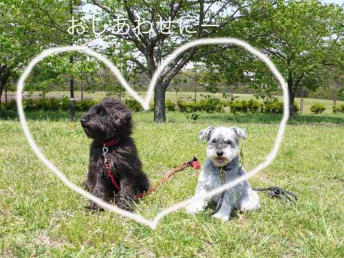 日本の結婚式_b0182969_1952857.jpg