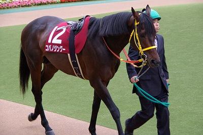 目黒記念は、上がり馬コパノジングーが2連勝で初重賞制覇_b0015386_1183142.jpg