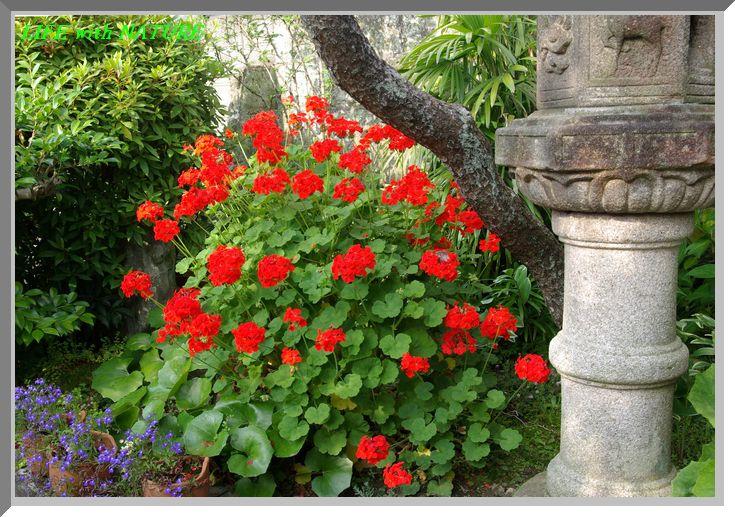 今朝の庭_b0093088_962674.jpg