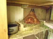 母さん鶏も大忙しです_f0106597_1522976.jpg