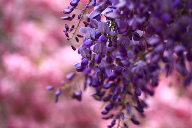 f0181310_2010313.jpg