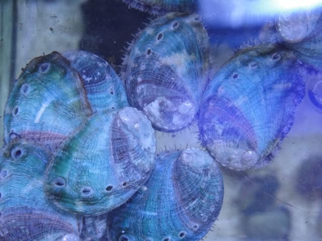 海水魚・サンゴ_f0189122_1321317.jpg