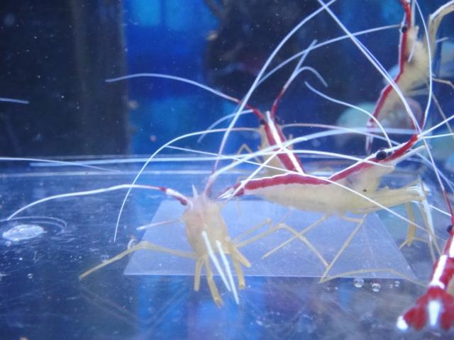 海水魚・サンゴ_f0189122_1321824.jpg