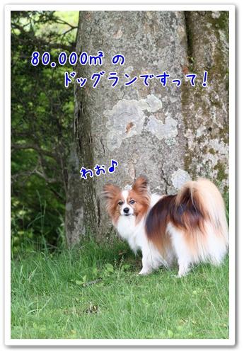 d0013149_0231398.jpg