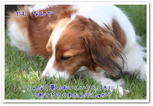 d0013149_0362793.jpg