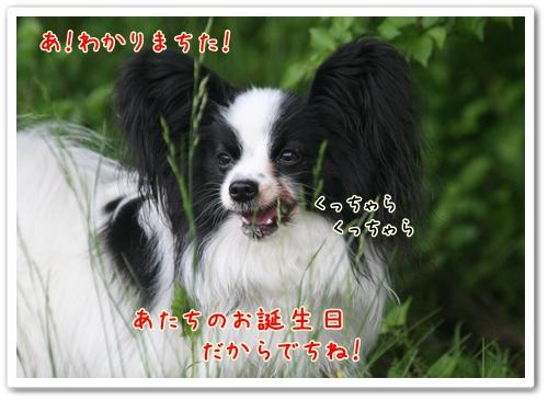 d0013149_0365945.jpg