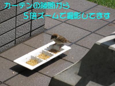 b0158061_20291757.jpg