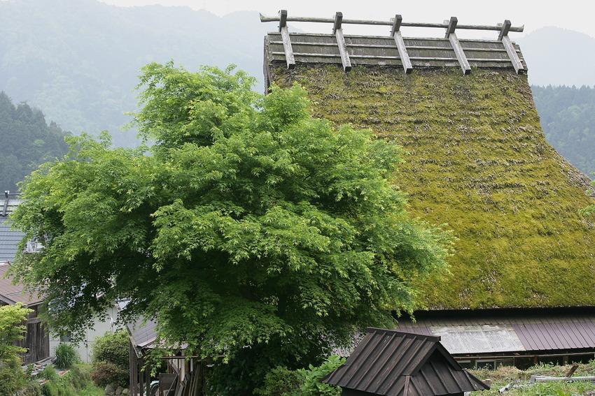 京都 美山  茅葺の里   6_f0021869_2341027.jpg