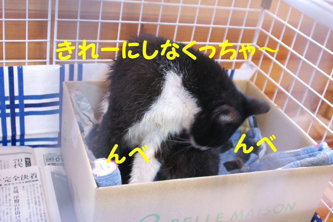 f0197682_16492040.jpg
