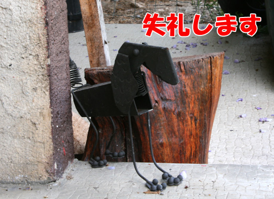 f0068385_524122.jpg