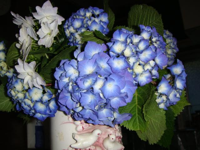 今日生けた、今年一番に咲いた、紫陽花~!ハハハーー。_d0060693_1942119.jpg