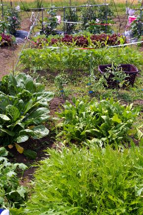 緑の王国で大収穫_c0170194_22485585.jpg