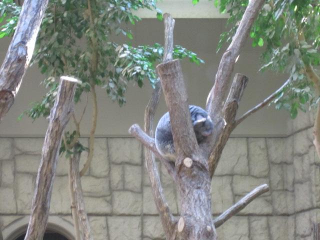 東山zoo_c0200314_145151100.jpg