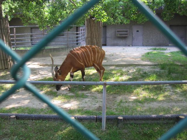 東山zoo_c0200314_14585453.jpg