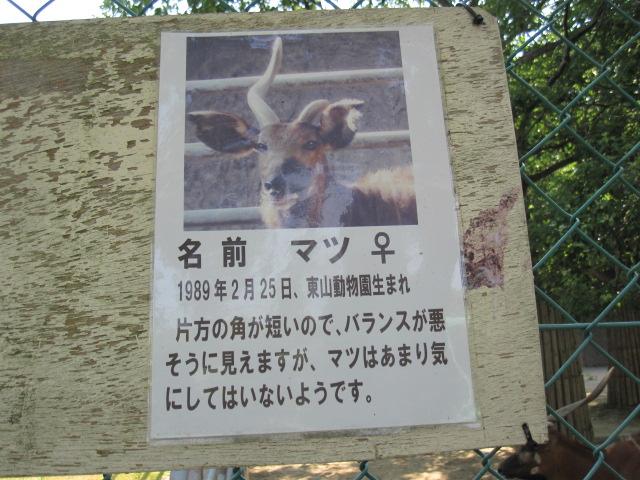 東山zoo_c0200314_1459520.jpg