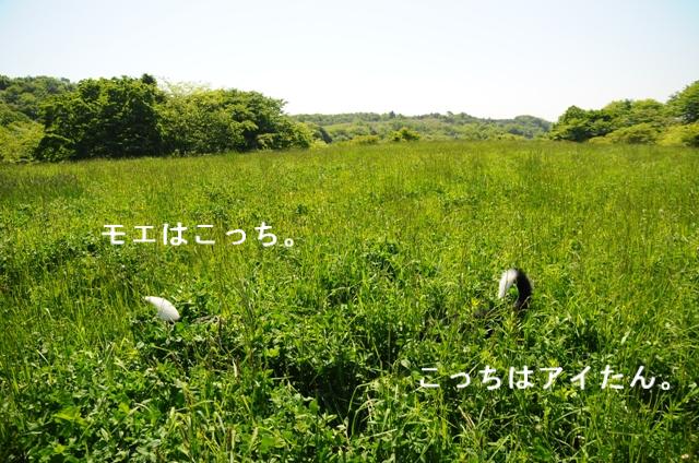 b0119620_145407.jpg