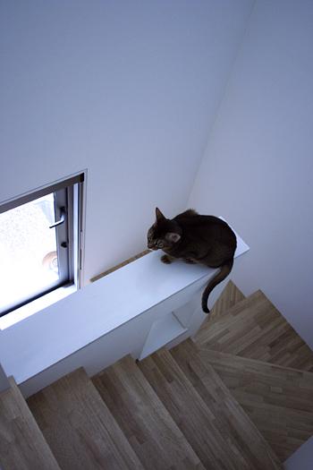 [猫的]インテリア雑誌_e0090124_743892.jpg