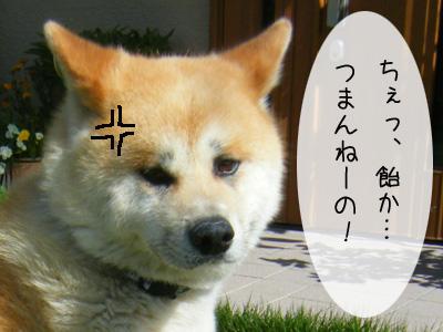 f0008935_15503474.jpg