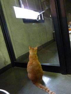 昼の鳩さん猫 しぇる編。_a0143140_2121282.jpg