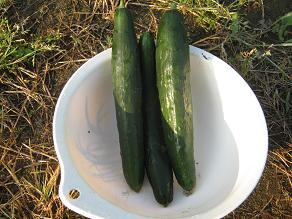 朝から農夫_a0139242_6171414.jpg