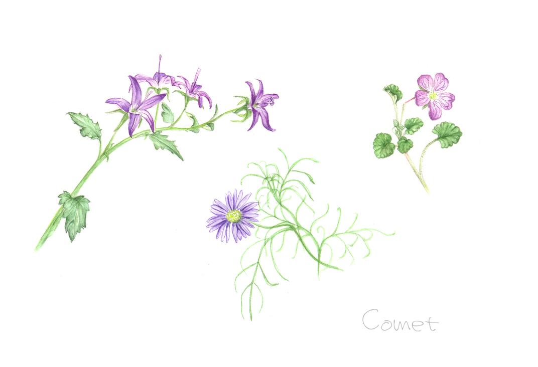 小さな花たち_c0206645_1502721.jpg