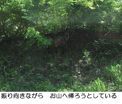 b0062748_1474269.jpg