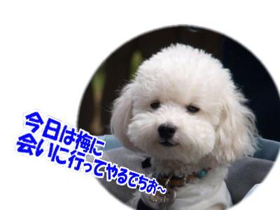 d0020869_11441111.jpg