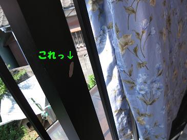 b0185771_16241364.jpg