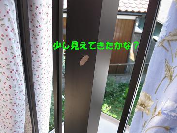 b0185771_16261781.jpg